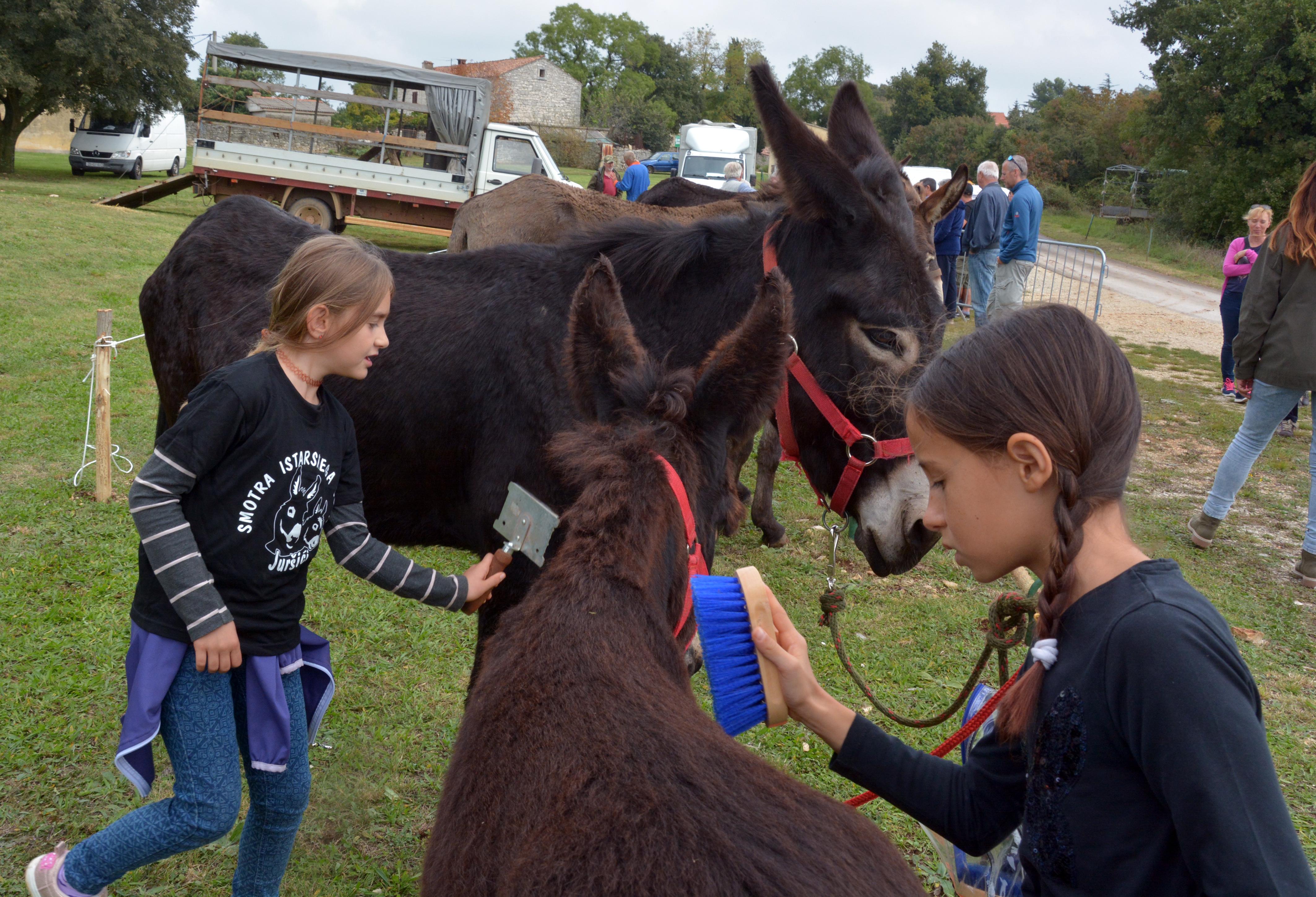 velika magarca crna