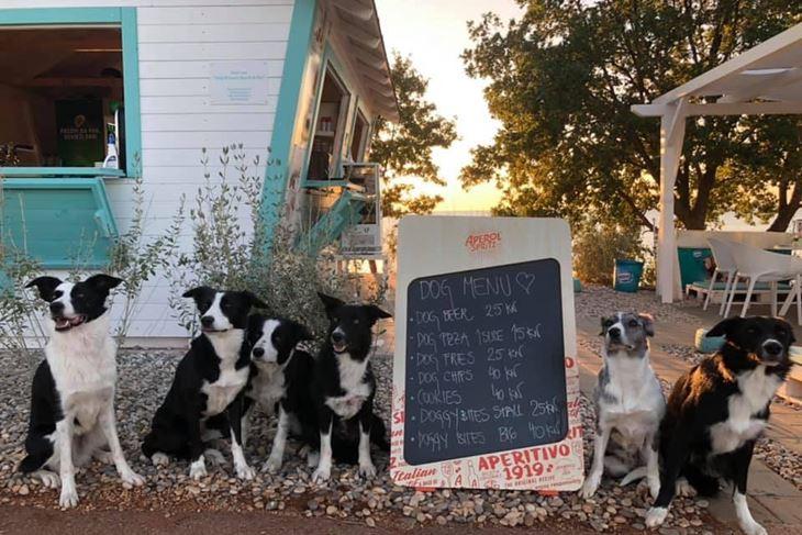 Jedna Slovenka dolazi u bar sa šest svojih pasa