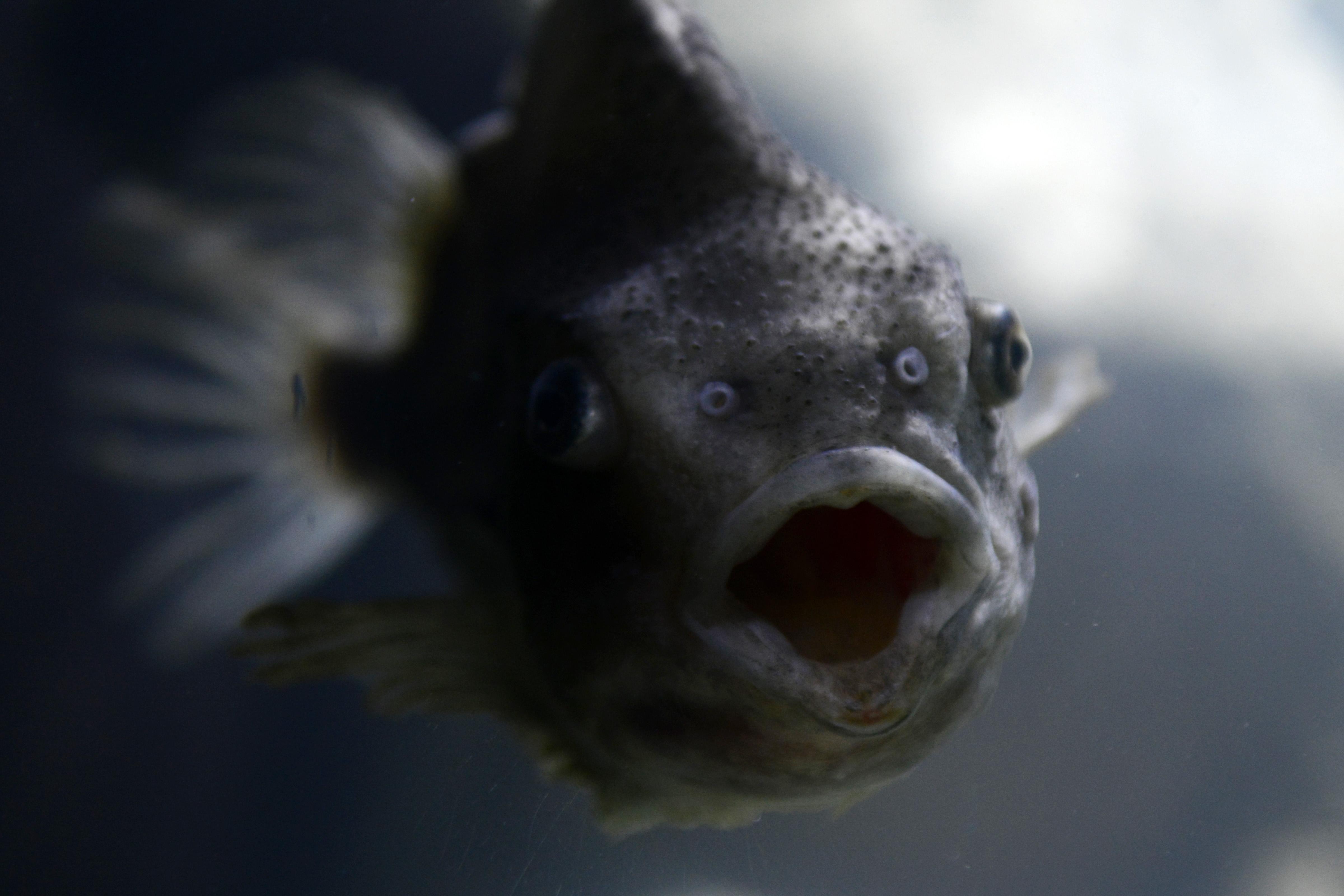 u riba druženje