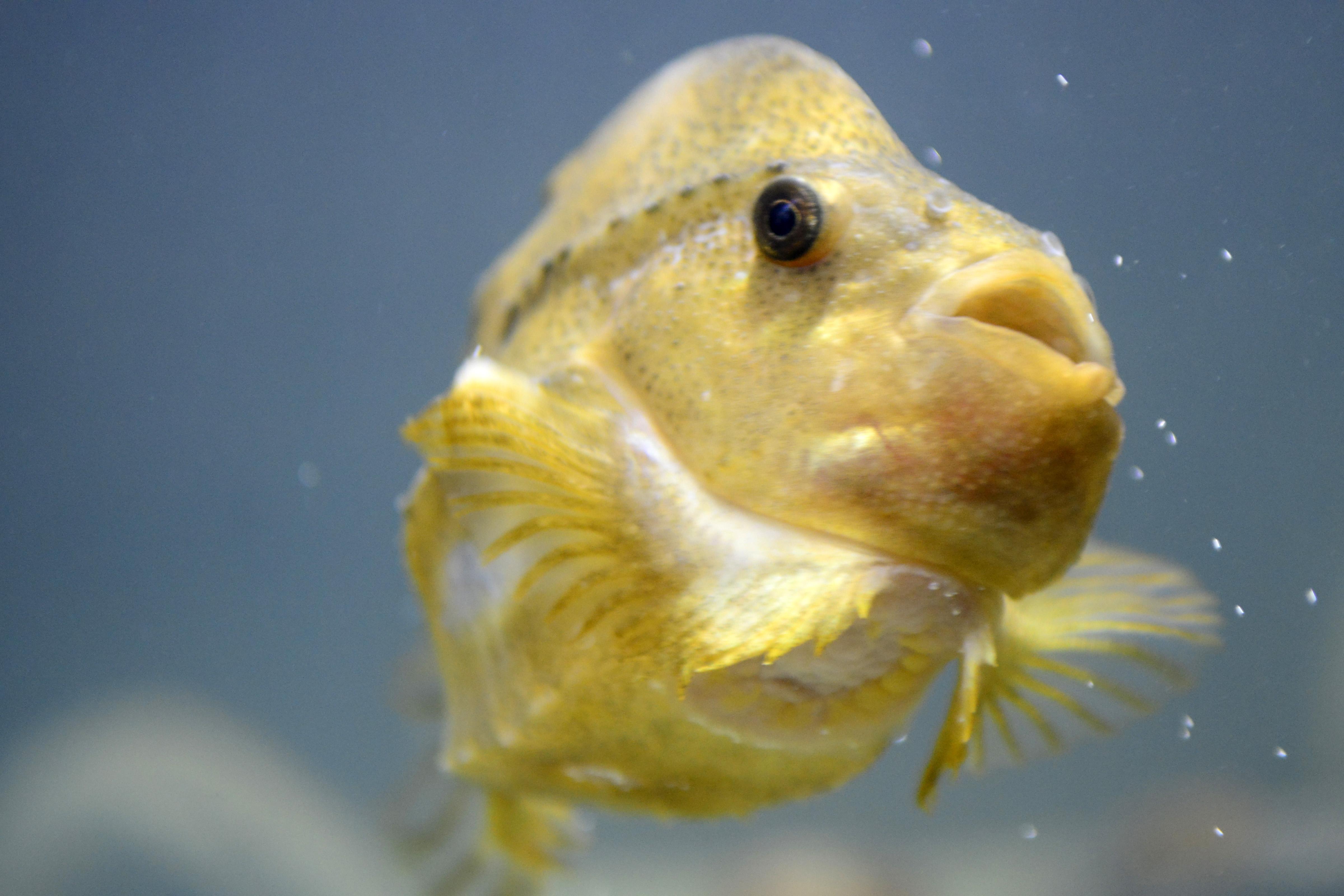 Zakačite se na ribe