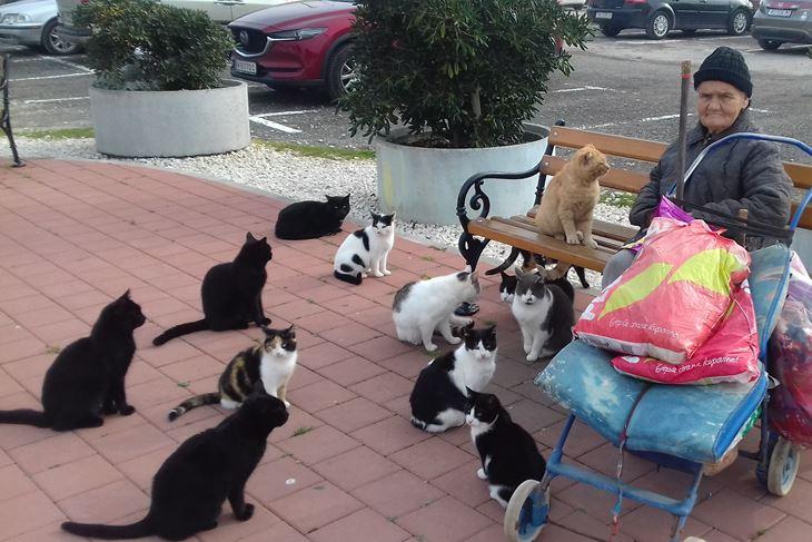 Mace su pitome, uhranjene, sterilizirane i ne boje se pasa (Jasna ORLIĆ)