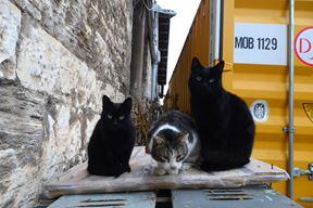 Mačke iz brodogradilišta Uljanik (Dejan ŠTIFANIĆ)