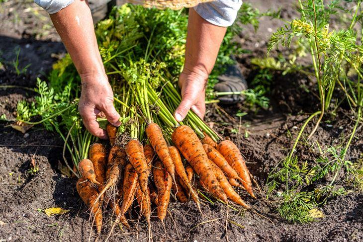 Valfresco Direkt je online tržnica povrća, voća, mesa, mesnih i morskih delicija, sireva