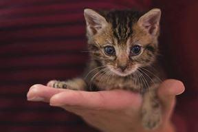 Poticanje udomljavanja, ukidanje bilo kojeg oblika zlostavljanja životinja neki su od ciljeva