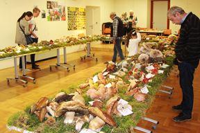 Izložbe su dobra prilika za upoznavanje gljiva (Snimio Luka Jelavić)