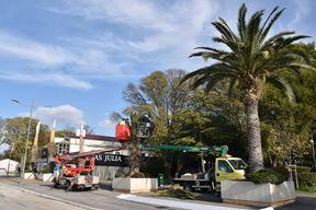 Radnici Herculanee jučer su orezivali suhe grane i zamotavali palme (Snimio Duško Marušić Čiči)