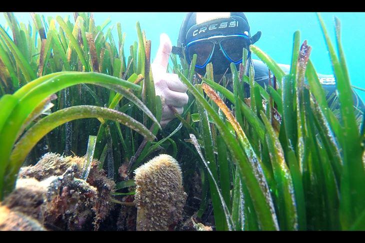Fotograf i ronilac Marinko Babić pronašao je perisku u uvali Bijeca kod Medulina na 2,5 metara dubine