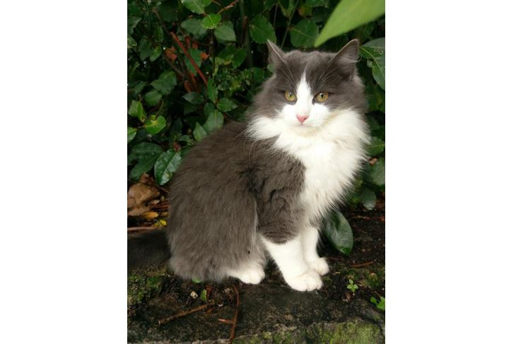 Maca Sivka