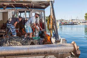 Novigradski ribari