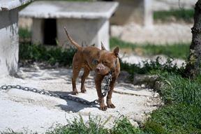 Zanemareni psi (Cropix)