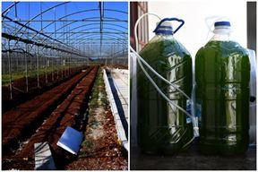 Alge - hrana budućnosti
