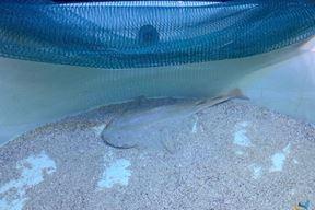 (Foto Aquarium Pula)