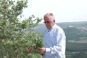 Svečenik Ante Tonči Jukopila