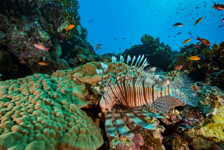 Zagrijavanje Sredozemnog mora uzrokuje migracije stranih vrsta koje zamjenjuju endemske vrste Sredozemlja