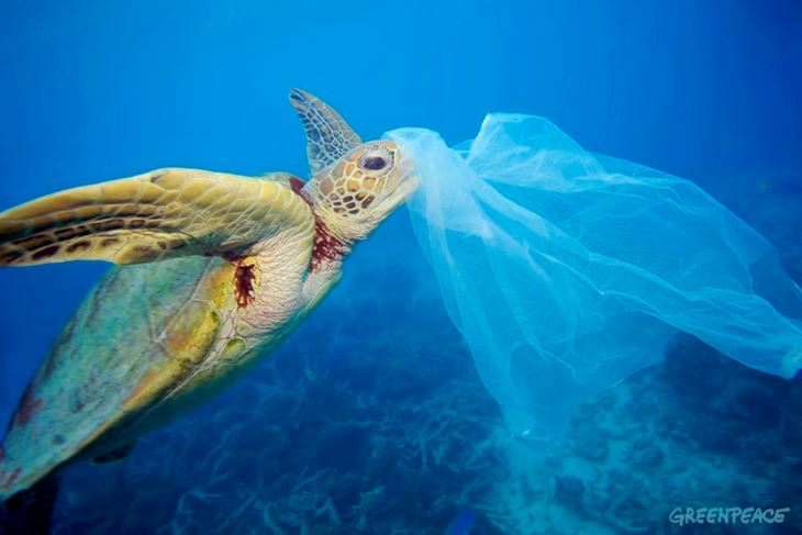Glavata želva (Foto: Greenpeace)