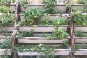 Vertikalni vrt