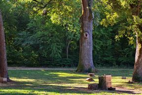 Šijanska šuma (Snimio Enes Seferagić Enki)