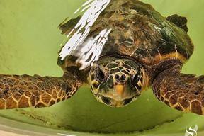 Ilustracija (foto Aquarium Pula)
